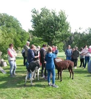 Sommerfest auf dem Alpakahof am 22.6.2018